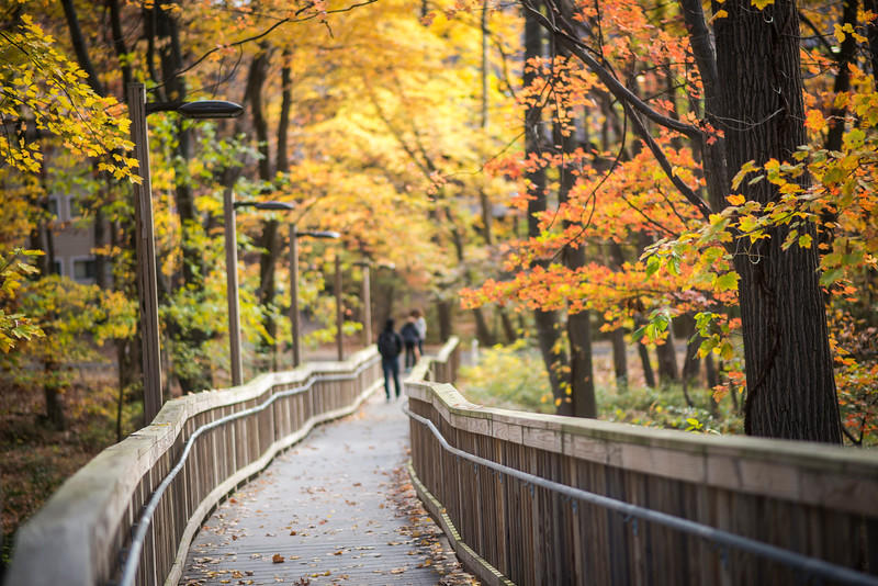 George Mason's Fairfax campus during Autumn is a perfect time for students to enjoy the changing seasons.